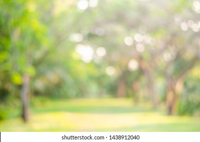 abstract bio green blur nature background trees lush foliage in the park at morning with sunlight.