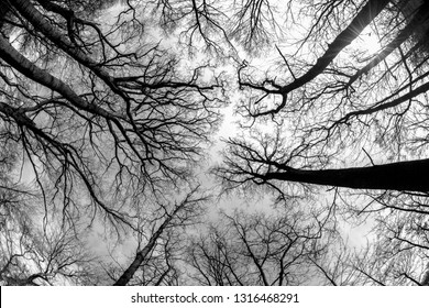 Abstract black and white background made of trees with a fisheye lens