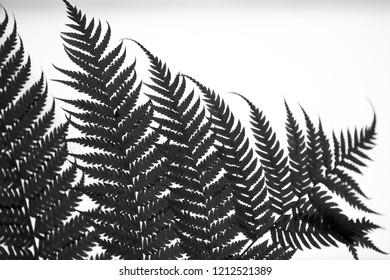 Abstract black & white fern leaf / Abstrakter Farn in schwarz und weiß
