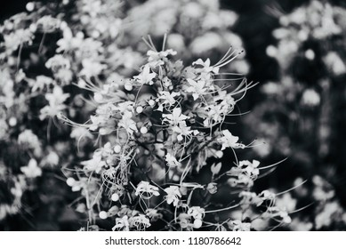 Abstract black and white flowers isolated unique natural photo