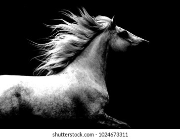 Abstract Black and White Horse