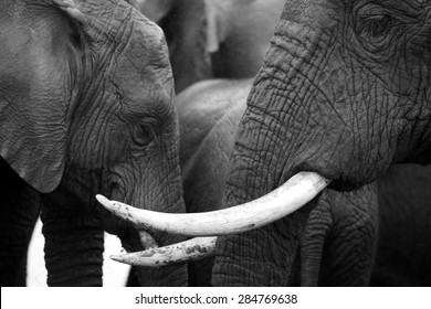 An abstract black and white image of a herd of elephants close up.