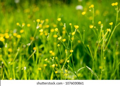Abstract Bloom green grass with light bokeh from nature blurred background,  Forest nature bokeh, Spring nature green bokeh, Green bokeh with abstract light nature for design