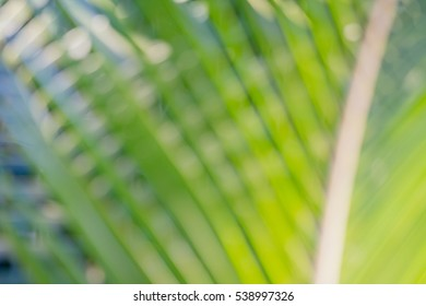 Abstract blue bokeh background of coconut palm leaf