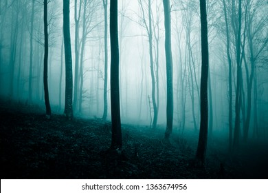 Abstract blue green foggy light in the fairytale forest landscape.
