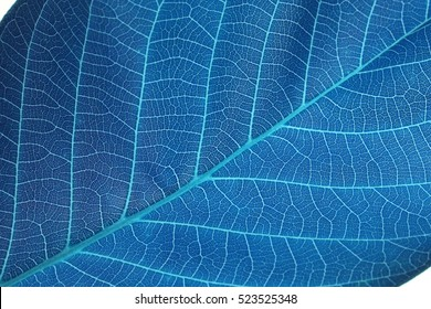 abstract blue leaf macro background