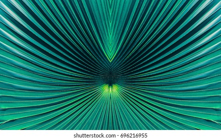 abstract blue stripes from nature, tropical palm leaf texture background, vintage tone