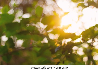 Abstract blur bokeh sunlight through the trees.