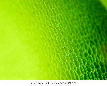 abstract blur close up shot of Green aquatic plant cells under microscope.