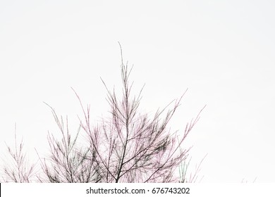 Abstract blur and defocused dead tree for background