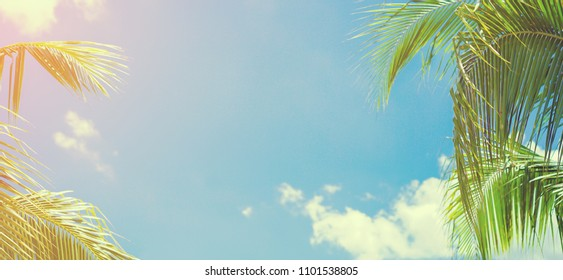 abstract blur focus of green coconut leaves on sunny sky with cloud background for summer season holiday concept