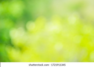 Abstract blur green color for background,blurred and defocused effect spring concept for design  background abstract green bubble outdoor focus texture.