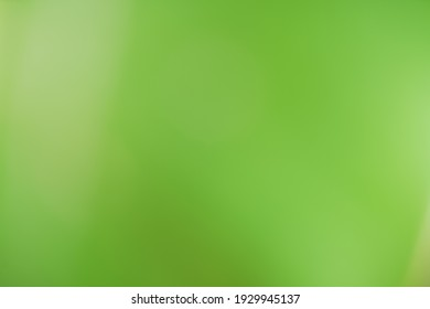 abstract blur green color for background,blurred and defocused effect spring concept for design background abstract green bubble outdoor focus texture