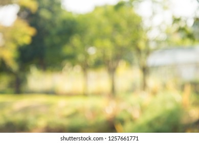 Abstract blur green garden in city park bokeh background - green nature concept
