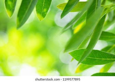 Abstract blur of green leaf on blurred greenery background with copy space using as background concept