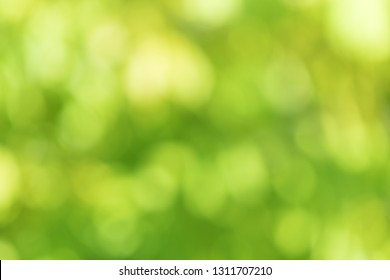 abstract blur green nature for background,blurred and defocused effect spring concept for design.