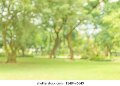 Abstract blur lawn green trees with bokeh light background in spring and summer garden