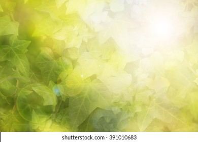 Abstract blur natural green ivy background