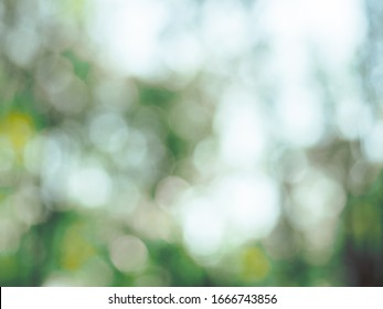 abstract blur of nature tropical rain forest with green trees.