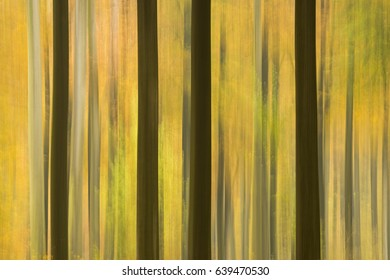 Abstract blurred autumn forest