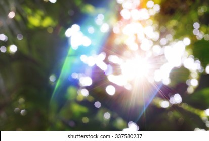 Abstract Blurred Background With Bokeh From Deep Forest And Lights Leak.