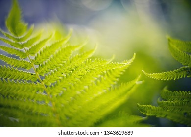 Abstract Blurred background with bokeh with fern leaves