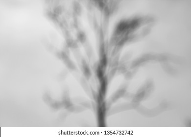 abstract blurred background , lonely tree against the sky, black and white photo