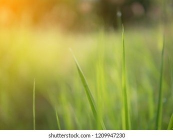 Abstract and blurred background with sunray effect in the morning. Green nature and blur vission