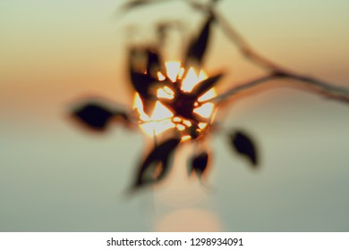abstract blurred background, sunset on the lake