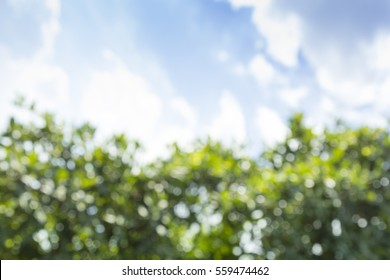 Abstract blurred background with tree and sky