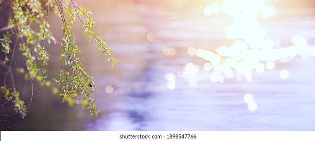 Abstrakter, unscharfer, schöner Frühlingshintergrund mit frischen Blättern im Baumzweig
