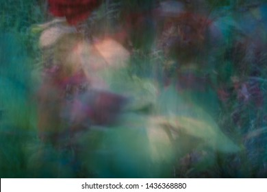 abstract blurred beckground flowers and grass