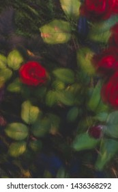 abstract blurred beckground flowers and leaves