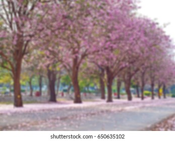 Abstract blurred field of pink trumpet tree(Tabebuia rosea) background