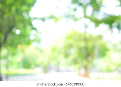 Abstract blurred green tree leaf background with bokeh sun light, Element of design