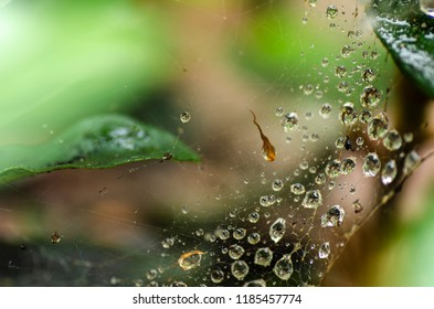 Abstract blurred image of water drop on spider web background