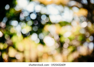 Abstract blurred nature background with bokeh of tree