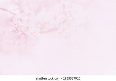 Abstract blurred spring floral background, blooming cherry tree