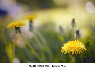 Abstract Blurred summer background with a yellow flower - a dandelion