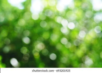 Abstract blurred summer green bokeh