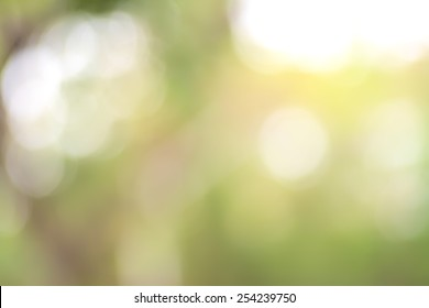 Abstract blurry natural green background with bright round bokeh