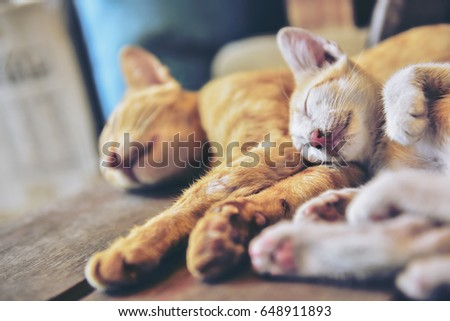 abstract blurry row happy small striped stock photo edit now