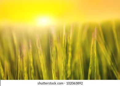 Abstract blury grass field at sunset