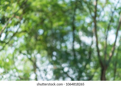 abstract bokeh background( Forest),circular facula