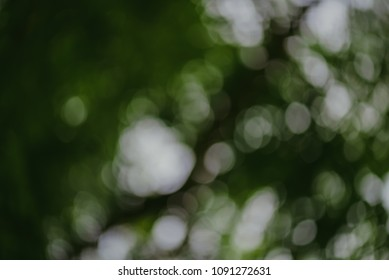 Abstract bokeh nature background and beautiful wallpaper.(high quality)  Defocus of green leaf on tree.