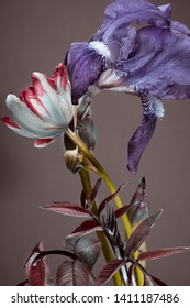 abstract bouquet of flowers on a dark background. tulips and irises. spring foliage.