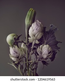 abstract bouquet. green tomatoes, cabbage and hops on a dark background.