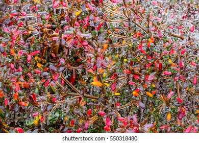 Abstract bush covered in thick ice left by freezing rain in a winter storm