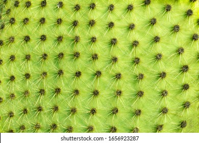 abstract cactus background close-up, macro shot