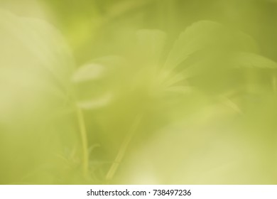 abstract cannabis green plant background